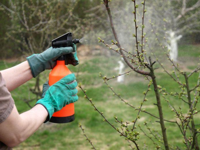 Чем обработать сад ранней весной – расскажем и покажем