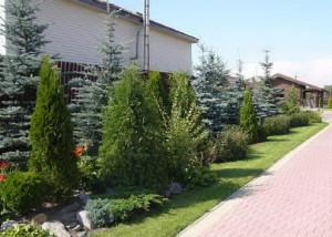 Для чего сажают декоративные кустарники на участке?
