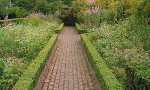 Виды густых декоративных кустарников, пользующиеся популярностью фото
