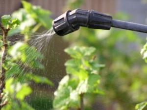 Фото способа удобрения растений по листу, kakprosto.ru