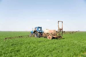 На фото - внесение фосфора в подкормку озимой пшеницы, molodejnoe.od.ua