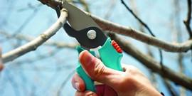 Обрезка плодовых деревьев осенью и весной – техники и полезные советы