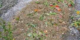Чем укрыть клубнику на зиму – тщательный уход для отличного результата