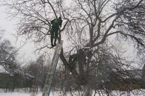 На фото - обрезка старой яблони, soweren.ru