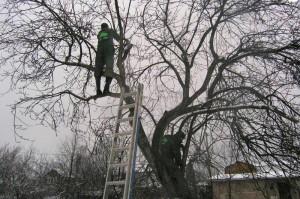 На фото - обрезка сухих веток яблони, soweren.ru