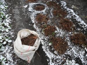 На фото - укрытие клубники на зиму, moysadogorod.com