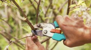 Технологии обрезки – инструкции и видео