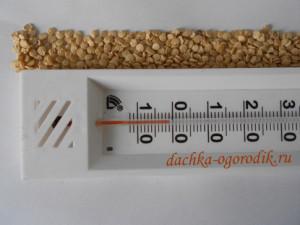 На фото - закалка семян перед посадкой, dachka-ogorodik.ru