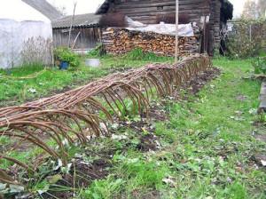 Фото пригибания кустов малины на зиму, smartorchard.ru