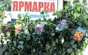 Фото саженцев плодовых кустарников, yarnews.net