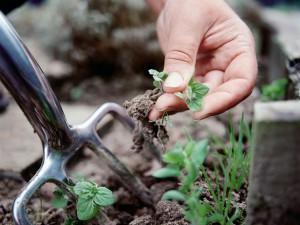 Фото прополки сорняков на огороде, fb.ru