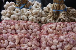 На фото - зимние сорта чеснока, botanichka.ru