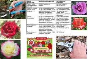 Фото комплексного удобрения роз весной, rasteniia.com
