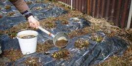Подкормка клубники весной – обеспечиваем хороший урожай