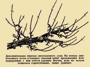 На фото - обрезка боковых побегов старой яблони, landart.ru