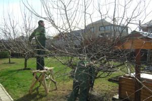 Плодовые деревья – обрезка яблонь, персиков и абрикосов фото