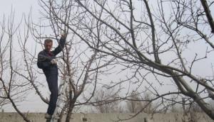 Пасынкование и наклон ветвей – полезные приемы фото