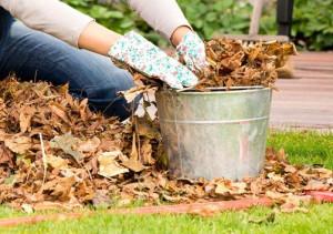 Подготовка растений после зимы фото