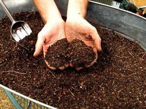 На фото - удобрение вишни компостом, fruittree.ru