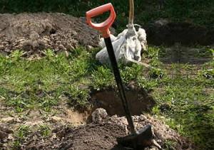 Особенности посадки груш