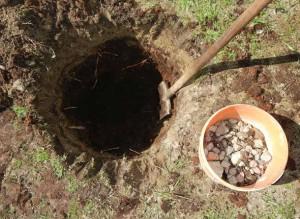 Подготовка ямы и посадка груши