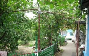 На фото - арка с виноградом около дома, ovidiopol.od.olx.ua