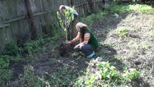 Фото высаживания саженца персика, youtube.com