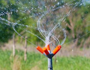 Важные моменты полива на открытом грунте и в теплице фото