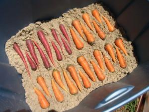 На фото - хранение моркови в песке, da4nik.net.ua