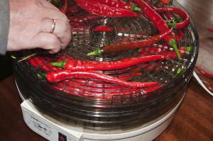 Фото подсушивания горького перца в электрической сушилке, moyugolok.livejournal.com