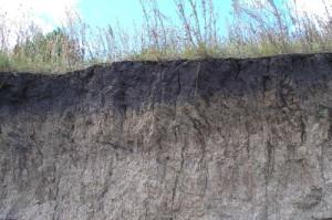 На фото - темно-серые лесные почвы, sengiley.ecoclub.org.ru
