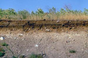 На фото - светло-серая лесная почва, ombudsmandeti.ru