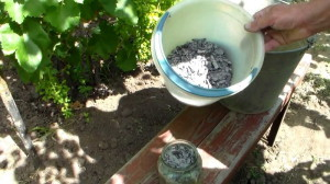Фото опрыскивания кустов виноград настоем древесной золы, youtube.com