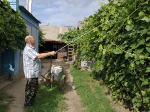 На фото - полив кустарников винограда, vinograd-is.ru