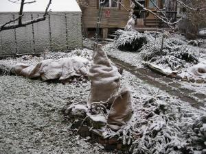 Фото утепления корней хвойников еловым лапником, peredelka.tv
