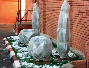 Фото защиты хвойных деревьев от мороза полиэтиленовой пленкой, liveinternet.ru