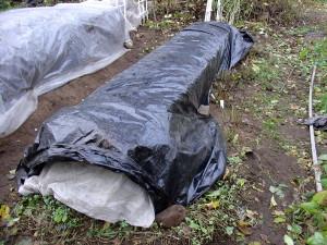 На фото - воздушно-сухой метод укрытия клубники, floraprice.ru