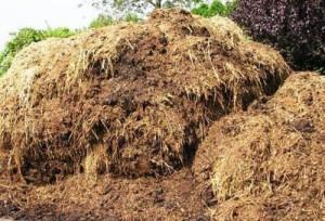 На фото - удобрение почвы весной с помощью навоза, kem.1gs.ru