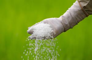 На фото - какие минеральные удобрения вносят весной, fruitnews.ru