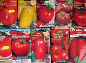 Фото семян крупных сортов помидоров, tomat-pomidor.com