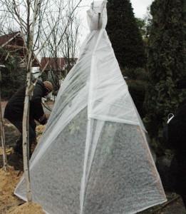 На фото - защита молодых деревьев от снега, dndz.com.ua