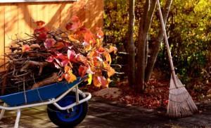 На фото - уборка мусора около плодовых деревьев, greenmarket.com.ua