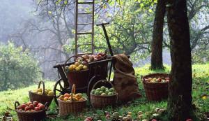 Предстоящие работы в саду и на огороде