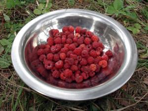 Подготовка ягод к обработке фото