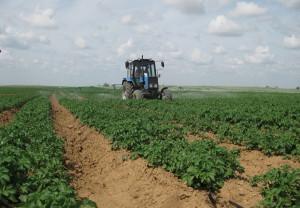 Фото голландской технологии выращивания картофеля, forumhouse.ru