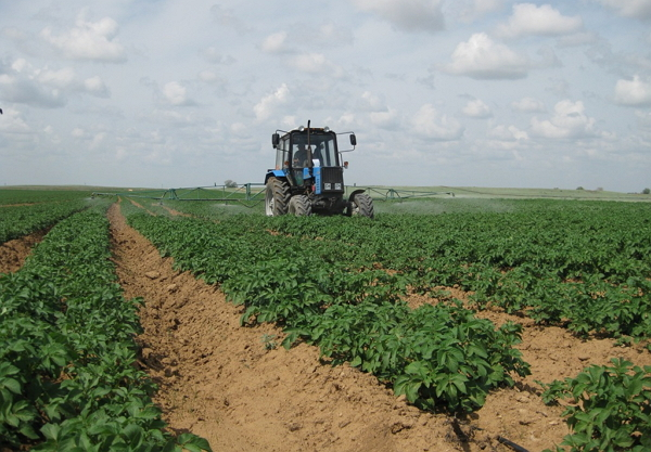 Выращивание картофеля по голландской технологии с видео