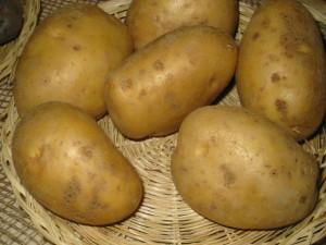 Фото картофеля сорта Мона Лиза, supersadovod.ru