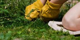 Как уничтожить сорняки – выбираем действенные методы