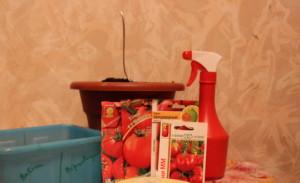 Фото семян помидоров для посева, orchardo.ru