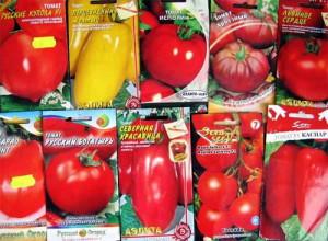 На фото - ранние сорта помидоров, liveinternet.ru